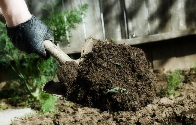 Совковая лопата с перегноем для внесения под картофель