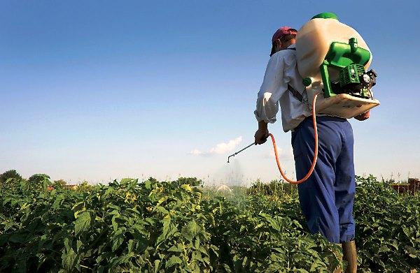 Обработка посадок картофеля с помощью механизированного опрыскивателя, размещаемого на спине работника