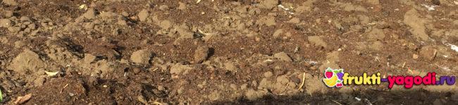 Перекопанная земля с осени под картошку с удобрениями