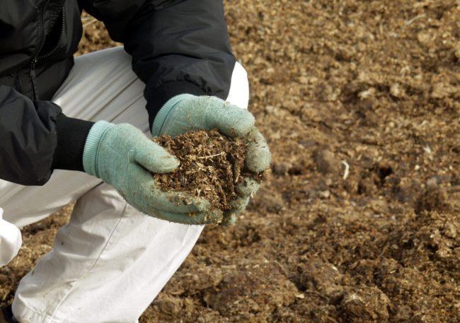 Горсть птичьего помета для осенней подкормки почвы после уборки картофеля