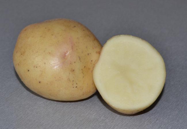 Внешний вид и разрез корнеплода картофеля столового сорта Невская
