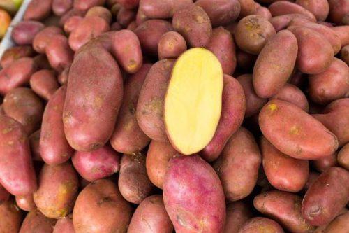Разрез корнеплода картофеля сорта Ред Скарлет с желтоватой мякотью