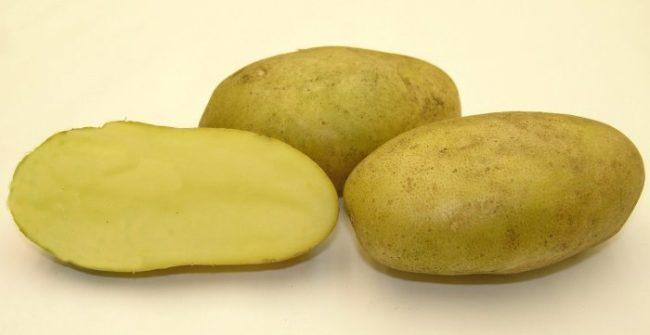 Разрез корнеплода картофеля сорта Удача с нежно-желтой мякотью