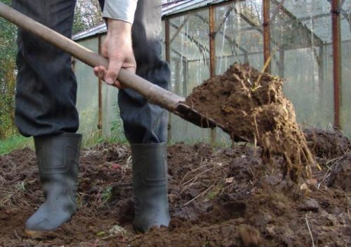 Коровий навоз для осеннего внесения в почву под картошку