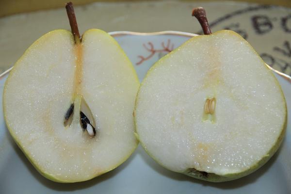 Разрез плода груши сорта Чижовская универсального предназначения