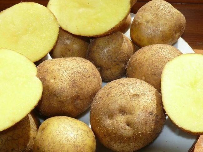 Клубни картофеля столового сорта Венета немецкой селекции