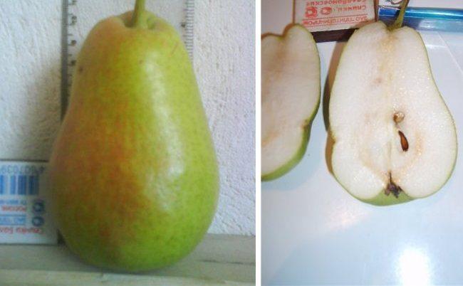 Внешний вид груши сорта Красавица Черненко и разрез плода