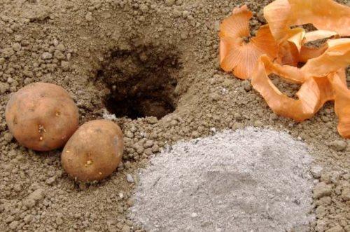 Использование шелухи лука при посадке картофеля