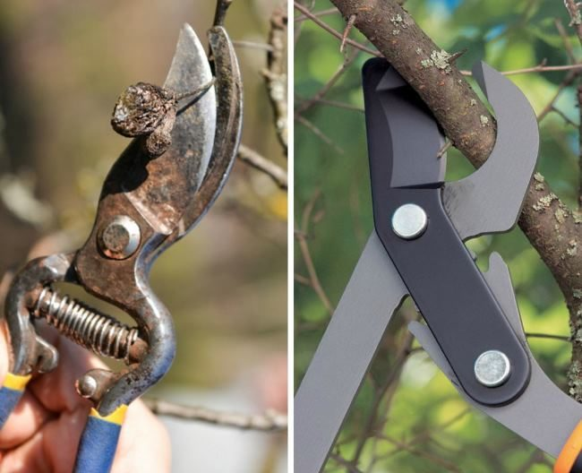 Секатор и сучкорез – садовые инструменты для осенней обрезки груши