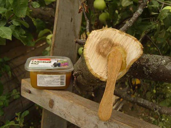 Замазка спила толстой ветки груши садовым варом