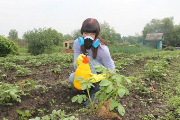 Опрыскивание картофеля от колорадского жука в защитной маске