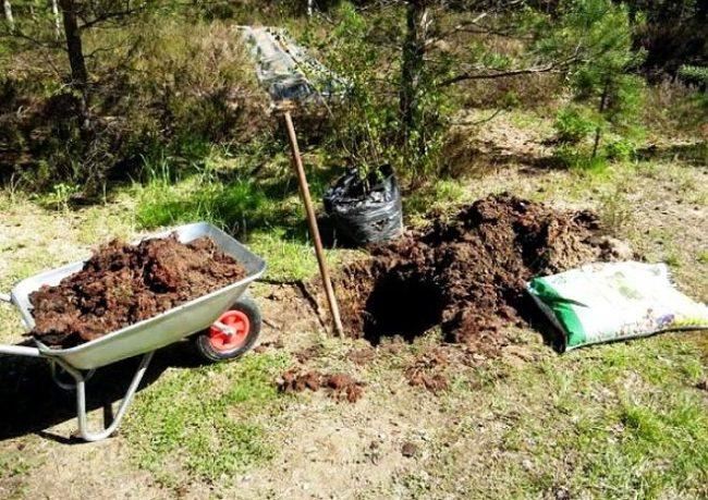 Садовая тачка с питательным грунтом и мешок с торфом для посадки груши