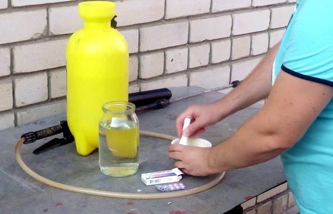 Разведение таблеток тетрациклина в водном растворе для обработки груши