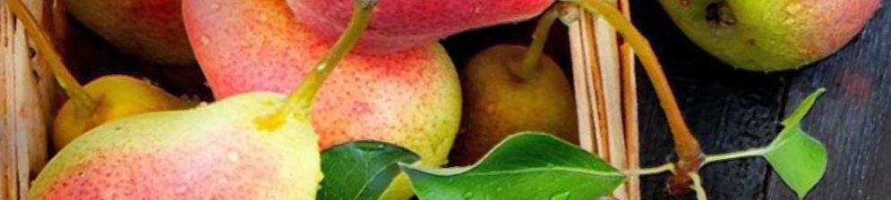 Спелые плоды груши сорта Русская Красавица в лукошке
