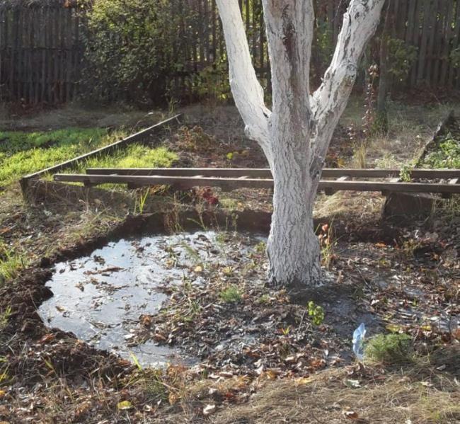 Поздний осенний полив взрослого дерева груши в своем саду