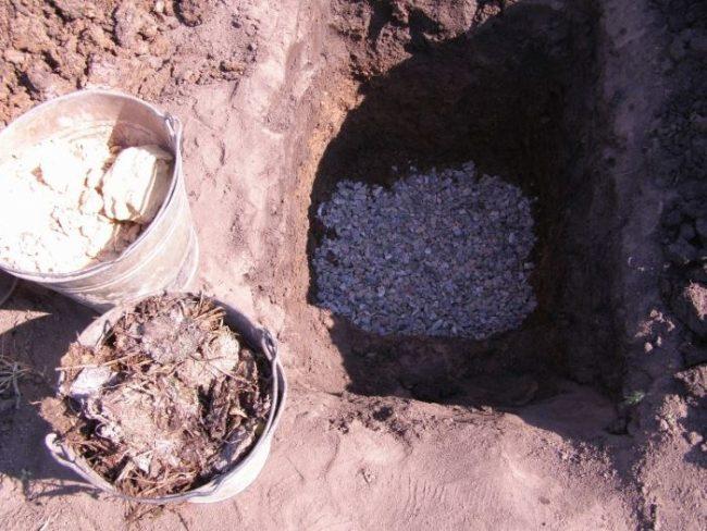 Устройство дренажного слоя в посадочной яме для груши