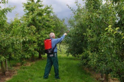 Летнее опрыскивание деревьев груши от вредных насекомых