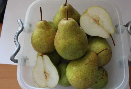 Плоды груши южного сорта Сокровище с белой мякотью