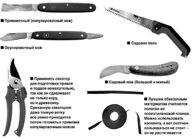 Садовая пила, секатор и различные ножи для выполнения прививки груши
