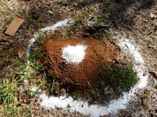 Небольшой муравейник после обработки негашеной известью