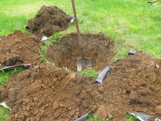 Подготовка посадочной ямы для груши своими руками