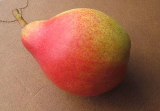 Крупная груша сорта Любимица Каппа с красным бочком