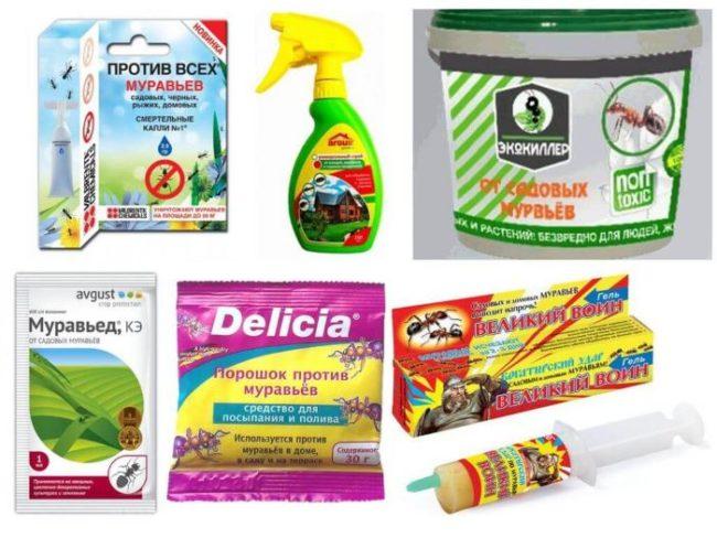 Самые эффективные препараты для борьбы с муравьями в теплице