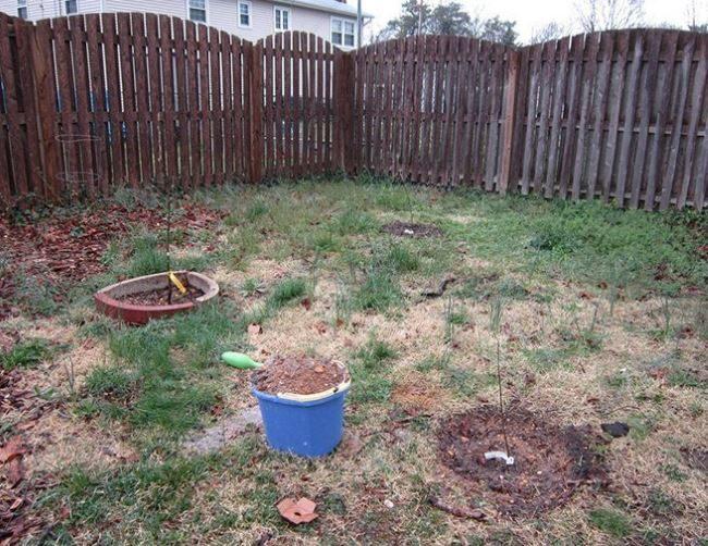 Место для груши на садовом участке