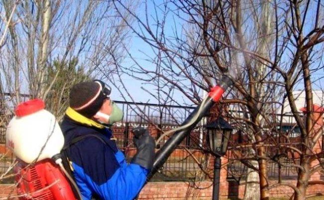 Обработка плодового сада от болезней и вредителей в середине осени