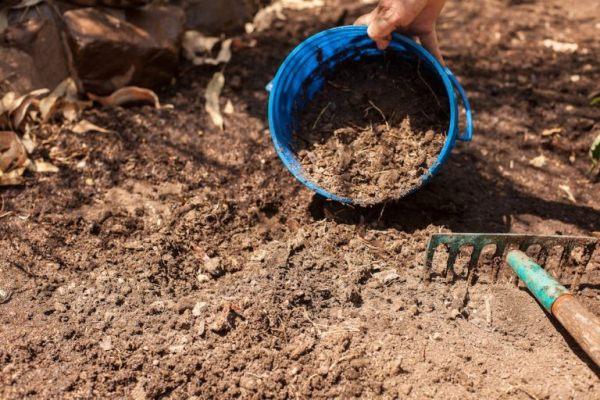 Подготовка почвы для посадки томатов в открытый грунт