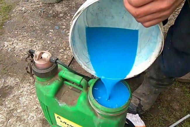 Заполнение бака садового опрыскивателя бордоской жидкостью