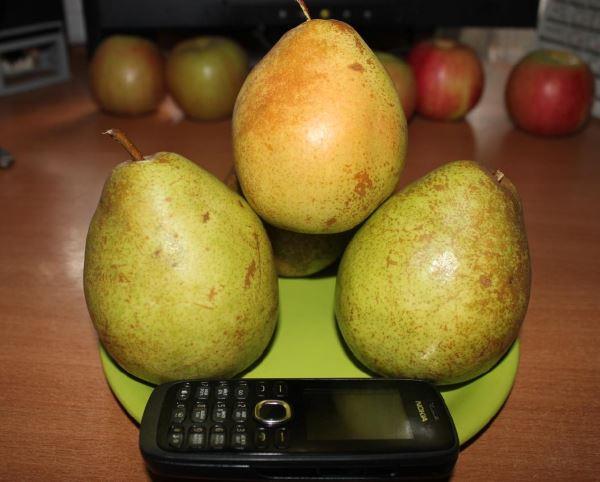 Спелые груши и сотовый телефон на керамической тарелке зеленого цвета