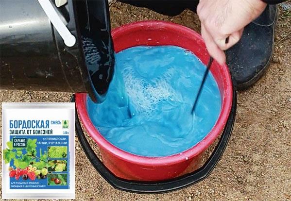 Разведение бордоской жидкости в пластиковом ведре для обработки груши от ржавчины