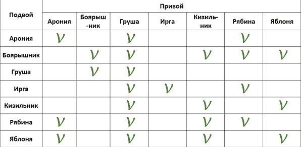Таблица совместимости привоя груши с подвоем различных деревьев