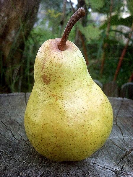Крупный плод груши сорта Вильямс Летний вблизи