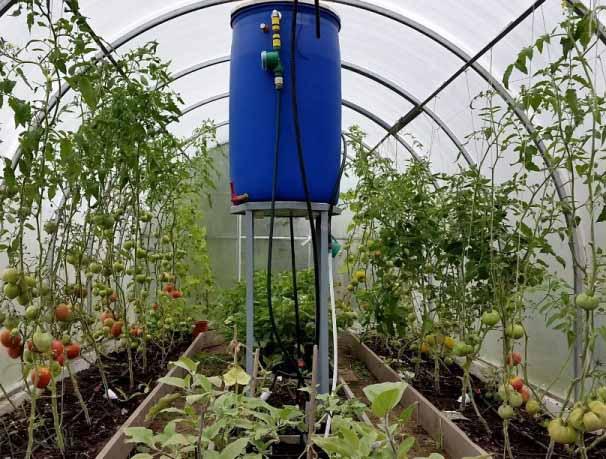 Бочка в теплице для полива томатов через систему капельных трубок