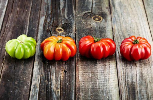 Четыре помидоры одинаковой формы, но различной степени спелости