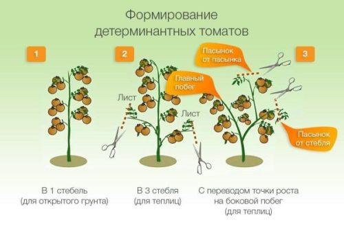 Принцип формирования кустов для детерминантных сортов томатов