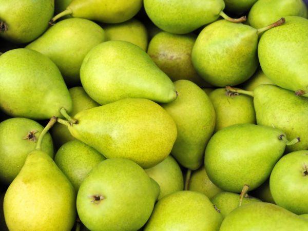 Зеленые груши зимнего сорта Февральский сувенир на хранении