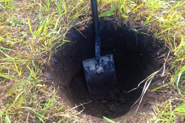 Штыковая лопата в посадочной яме для груши
