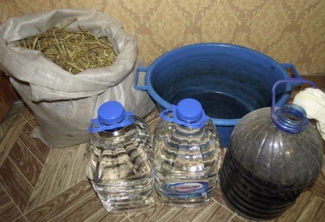 Приготовление соломенного настоя для профилактики фитофторы в теплице