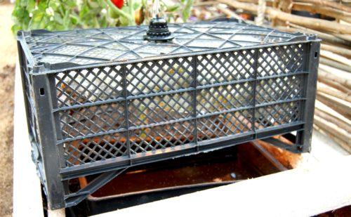 Ловушка для белокрылки в теплице с помидорой