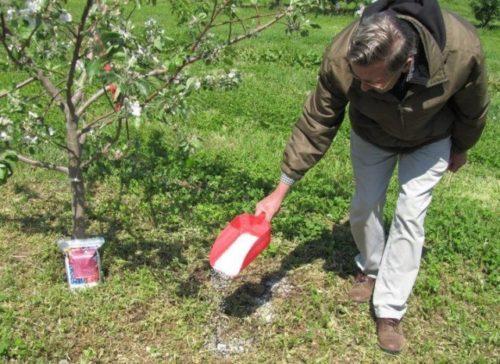 Весенняя подкормка груши минеральным удобрением