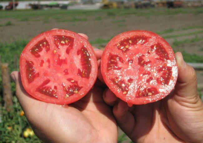 Две половинки разрезанного помидора для сбора семян