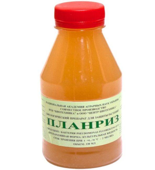 Флакон с жидким препаратом Планриз для борьбы с мучнистой росой и другими болезнями томатов