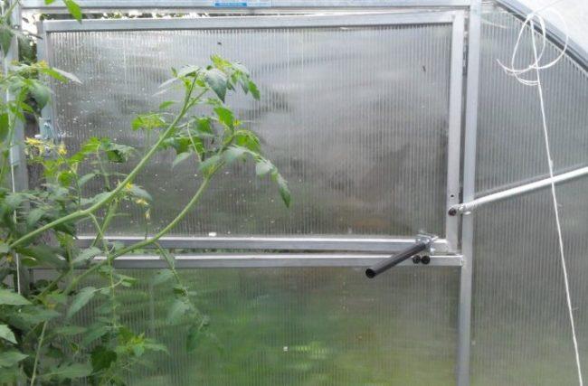 Помидора в теплице с системой автоматического проветривания