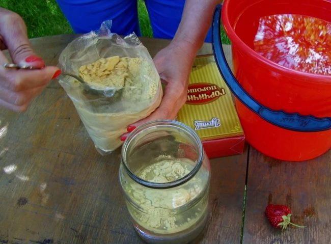 Разведение порошка горчицы для опрыскивания сада
