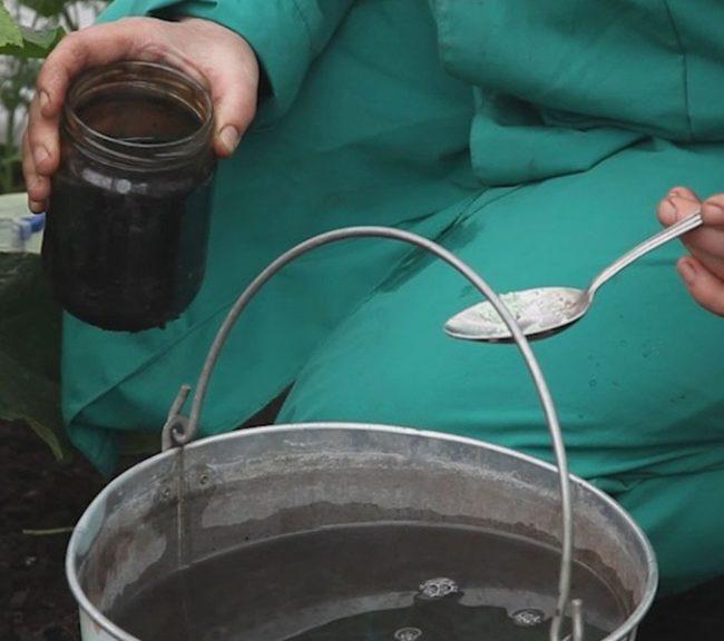Разведение марганцовки для дезинфекции почвы в теплице с помидорами