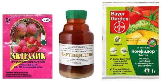 Препараты для уничтожения белокрылки в теплице с помидорами