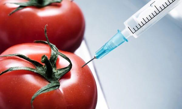 Ускорение созревания помидоры с помощью введения водки обычным шприцом